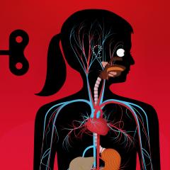 Application logo: Le corps humain [itunes]